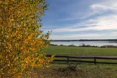 Golden Autumn tree Latvia Stock Images