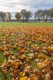 Golden Autumn tree Latvia Stock Photo