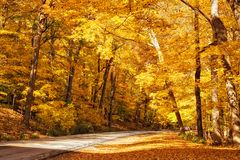 Golden Autumn Trees royalty free stock photos