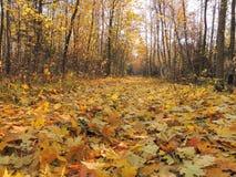 Golden autumn Stock Photo