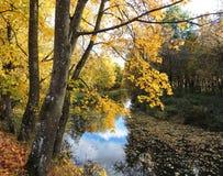 Golden autumn Royalty Free Stock Photography