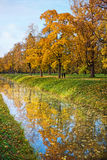 Golden autumn trees with reflection in water Stock Image