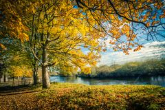 Golden Autumn Trees at the river in Scotland. Beautiful, golden autumn scenery with trees and golden leaves in the sunshine in Scotland stock image