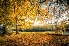 Golden Autumn Trees at the river in Scotland. Beautiful, golden autumn scenery with trees and golden leaves in the sunshine in Scotland royalty free stock photo