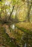Golden autumn trees and a small river. Autumn landscape. royalty free stock image