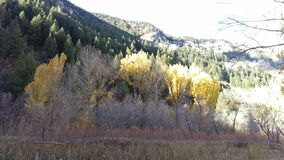 Golden Autumn Trees in South Fork Canyon stock image