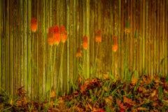 Golden autumn trees on wooden fence background, outdoor landscap Stock Photo