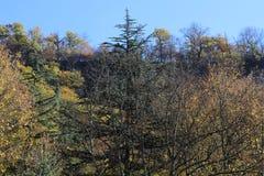 Golden autumn in wood in Georgia royalty free stock photos