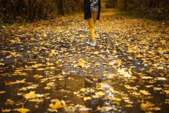 Golden autumn, yellow trees in sunlight, leaves underfoot. royalty free stock image