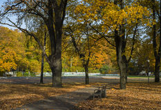 Golden autumnal park royalty free stock photography
