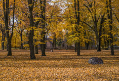 Golden autumnal park royalty free stock image