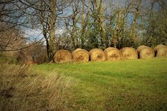 Golden bales of hay stock images