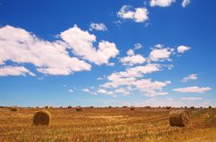 Golden bales of hay on the lands Royalty Free Stock Image