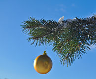 The Golden ball on a branch of the Christmas tree. Stock Photos