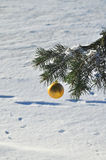 The Golden ball on a branch of the Christmas tree. Stock Photography