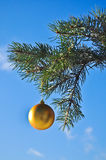 The Golden ball on a branch of the Christmas tree. Royalty Free Stock Photography