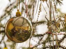 Golden ball on a branch of Christmas tree hanging. Decoration. Christmas tree toy Royalty Free Stock Image