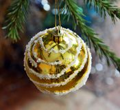 Golden ball on a branch of Christmas tree hanging. Decoration. Christmas tree toy Stock Photos