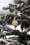 Golden ball on Christmas tree Royalty Free Stock Photo