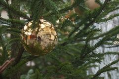 Golden ball in a christmas tree in the street Stock Photos