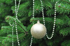Golden Ball shape Christmas decoration in green tree. Golden Ball shape Christmas decoration in real green tree Stock Photos