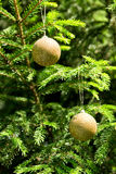 Golden balls - Christmas decoration in real tree stock photography