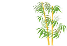 Golden bamboo. Vector illustration on Golden bamboo with leaves on white background. The illustation is available in eps Stock Photography