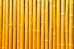 Golden Bamboo. A golden bamboo background for layouts and textures Royalty Free Stock Photos