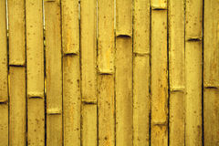Golden bamboo background Royalty Free Stock Images