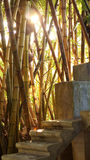 Golden bamboo forest with concrete stair Royalty Free Stock Photo