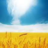 Golden barley and clouds in blue sky Stock Photography