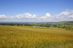 Golden barley field landscape Royalty Free Stock Photography