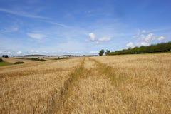 Golden barley fields Stock Photos