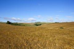 Golden barley landscape Stock Image