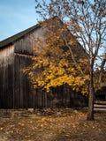Golden Barn Stock Image