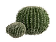 Golden_barrel_cactus_(Echinocactus_grusonii). Rendered 3d isolated golden barrel cactus (Echinocactus grusonii Royalty Free Stock Photos