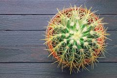 Golden barrel cactus in flower pot . Rustic background, flat lay, free space for text royalty free stock photo