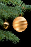 Golden baubles on pine branch Stock Images