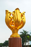 Golden Bauhinia Stock Photo