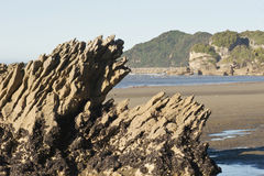 Golden Bay. A mussel laden rock at Golden Bay, Nelson, New Zealand royalty free stock photography