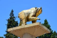 Golden Bear Statue - UC Berkeley Royalty Free Stock Photography