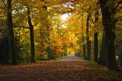 Golden beechlane in November. Last silent sunny day on this golden beechlane in October Royalty Free Stock Photo