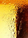 Golden Beer. Stock Image