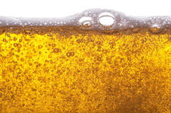Golden beer. Stock Photos