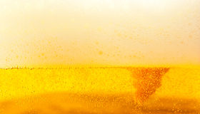 Golden beer with foam royalty free stock photo
