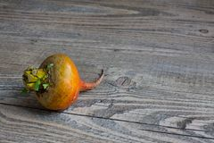 Golden Beet on Knotted Wood Table Royalty Free Stock Photos
