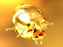 Golden beetle. On gold reflective background Royalty Free Stock Images