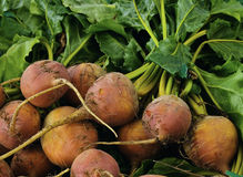 Golden Beets Royalty Free Stock Photos
