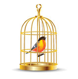 Golden bird cage with bird inside Royalty Free Stock Photos