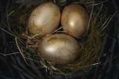 Golden bird eggs in a nest of tree branches and hay on a wooden background. royalty free stock images